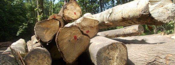 Ostrożnie z wycinką drzew. Od dziś nowe zasady