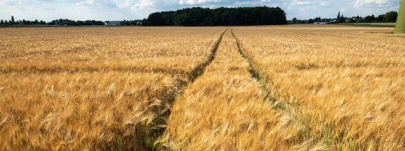 Rolniku, wypełnij obowiązek i weź udział w spisie!