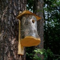 Będą wieszać budki lęgowe dla ptaków