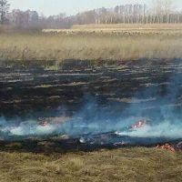 Płoną trawy na ul. Piaskowej